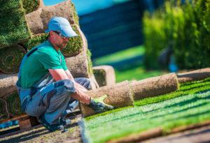 Landscape Designer Installing Turf Grass