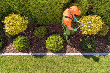 Turf Cutting for Landscape Design